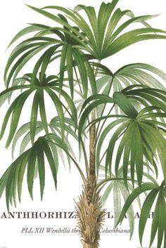 Riviera Palms
