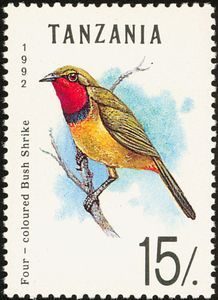 Four-colored Bushshrike (Telophorus quadricolor)
