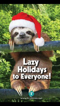 Xmas sloth