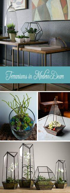 Terrariums in modern decor <3