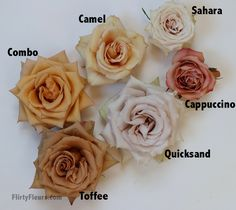 Flirty Fleurs Rose Study - Combo Camel Sahara Toffee Quicksand Cappuccino Brown Rose Study with roses from Mayesh Wholesale Wedding Flower Arrangements, Wedding Bouquets, Floral Arrangements, Rose Wedding, Floral Wedding, Wedding Flowers, Orange Wedding, Colorful Flowers, Beautiful Flowers