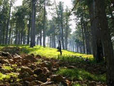 Εθνικός Δρυμός Πίνδου (Βάλια Κάλντα)   Δάση   Φύση   Ν. Γρεβενών   Περιοχές   WonderGreece.gr