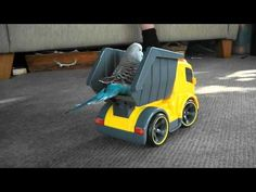 Jack the funny budgie riding in RC truck. Jack is adorable!