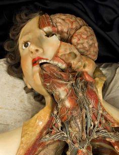 Florentine wax anatomical model, 1818 www.rossirestauro.com #rossirestauro #francescarossi #firenze #restauro #cera #cereanatomiche #wax #anatomicalwax #artconservation #beniculturali