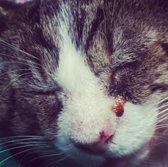 "Booger's situation was hopeless. Liz Kirkham found the feral cat outside her Oxford, Ohio, apartment curled up, fur matted, wheezing so badly that ""it sounded like he was drowning."" You might remember that description from the recent Monday Miracle post we published about Booger. That's when we told you Liz was raising money to get …"
