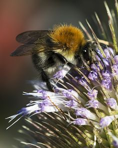 Insects, Bee, Animals, Pictures, Animales, Animaux, Bees, Animal, Bugs