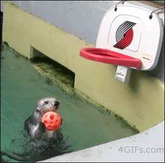 Otters make me happy