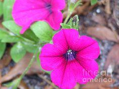 Good morning - Andrea Anderegg #flowers