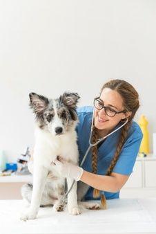 Veterinary World, Veterinary Medicine, Chinchillas, Best Dog Breeds, Best Dogs, Vet Pictures, Vet Jobs, Vet Assistant, Future Jobs