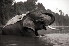 Mikki Yao com um elefante asiático.  (Foto por Sean Lee-Davies / Serviços News)