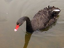 The Black Swan Theory was developed by Nassim Taleb to explain  1) the disproportionate role of high-impact, hard-to-predict, & rare events that are beyond the realm of normal expectations in history, science, finance & technology  2)The non-computability of the probability of the consequential rare events using scientific methods   3)The psychological biases that make people individually & collectively blind to uncertainty and unaware of the massive role of the rare event in historical affairs