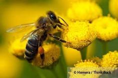 Researchers reveal that bees and flowers share a symbiotic relationship that results in pollination and proliferation of the plants. http://articles.mercola.com/sites/articles/archive/2013/03/11/flowers-bees.aspx