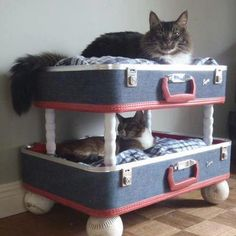 A wonderful way to use an old suitcase - I'm sure those kitties are very happy with their beds.