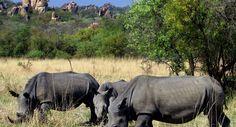 zimbabwe photos | Rhinocéros