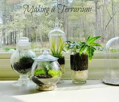 Making a Terrarium - Gardening For the Commitment Phobe