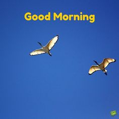 Happy Good morning image with birds flying
