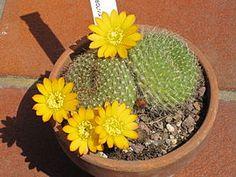 Cactus House Plants, Plants, Flowers