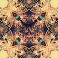 Cats and cats Crazy Cat Lady, Crazy Cats, I Love Cats, Cool Cats, Trippy Visuals, Trippy Pictures, Space Cat, All About Cats, Psychedelic Art