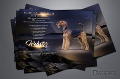 Advertisements for dog breeders, kennels and other business. Quality adverts design for print and online magazines,Professional Web page Graphic Design. Advert Design, Airedale Terrier, Web Design Services, Cattery, Graphic Design, Dogs, Art, Art Background, Doggies