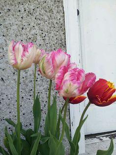 Tulips Red Tulips, Glass Vase, Plants, Home Decor, Decoration Home, Room Decor, Plant, Home Interior Design, Planets