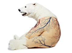 deborah simon embroiders the furless anatomy of bears