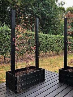 Backyard Planters, Garden Planter Boxes, Balcony Plants, Backyard Landscaping, Patio, Vertical Garden Design, Inside Garden, Pergola, Jungle Gardens