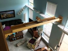 The Vertical Cat - Catification with Custom Contemporary Cat Furniture, Trees, Shelves, Stairs, Tunnels - Create vertical space to make a kitty superhighway Contemporary Cat Furniture, Cat Walkway, Pet Furniture, Custom Furniture, Furniture Buyers, Living With Cats, Cat Perch, Cat Shelves, Cat Playground