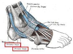 Using Myofascial Release to Treat & Prevent Plantar Fasciitis and Shin Splints