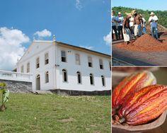 Rota do cacau: fazendas para visitar no sul da Bahia - Guia do Turista