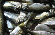 La #medicina scopre il #pesce come alleato contro la #depressione