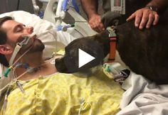 Dog Visits Hospital To Say Goodbye To Her Dying Owner