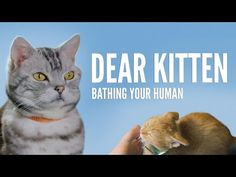 Dear Kitten: Bathing Your Human | Freekibble        Yes, at the end there is a short ad, but it's worth it.   And hey, it's at the end!