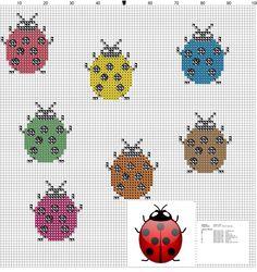 Lady bugs | Lieveheersbeestjes