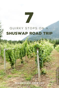 Take a day trip from Kamloops through the Shuswap and brake for local farm stands, eateries, and fun oddities like a motorcycle museum and a donkey refuge. Here are 7 quirky stops. Motorcycle Museum, Highway 1, Farm Stand, Canadian Rockies, Lake View, Walking Tour, Public Art, Donkey, Day Trips