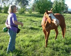 10 Simple Tricks to Teach Your Horse - basic tricks that can lead to more complicated tricks.