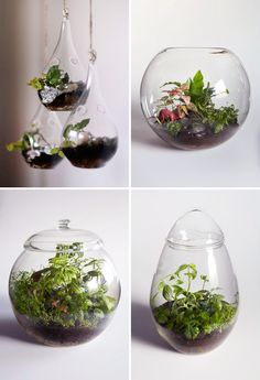 I think I just found a new hobby... Terrariums!