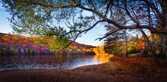 Fall Color Extravaganza!    Taken by Dave Veffer at the Ramapo Reservation in Mahwah, NJ