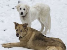 Candace and Wolf enjoying a snowy day.