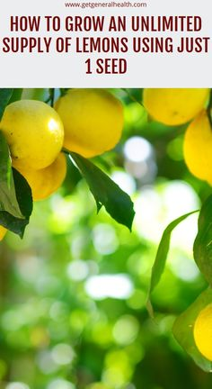 How to Grow an Unlimited Supply of Lemons Using Just 1 Seed Natural Health Remedies, Natural Cures, Herbal Remedies, Health And Wellness, Health Tips, Constipation Remedies, Health Vitamins, Sinus Infection