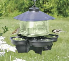 Duncraft.com: Bird Water Cooler with Roof