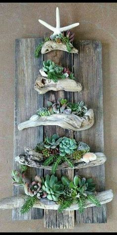 Different kind of Christmas tree for the beach. ガーデニング Diy, Driftwood Art, Driftwood Projects, Driftwood Beach, Driftwood Planters, Driftwood Christmas Tree, Make Christmas Tree, Christmas Tree Origin, Palette Christmas Tree