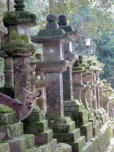 Japanese deer at Kasuga Grand Shrine, Nara, Japan