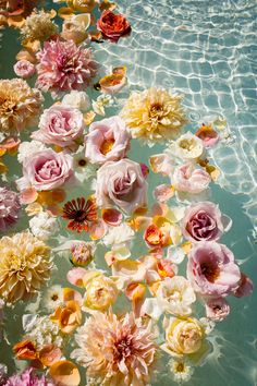 Water Aesthetic, Flower Aesthetic, Blue Aesthetic, Flower Iphone Wallpaper, Wallpaper Backgrounds, Wallpapers, Water Flowers, Aesthetic Backgrounds, Pretty Pictures