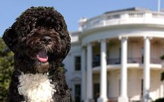 A new infographic shows that canines have been guiding and comforting U.S. presidents for more than 200 years