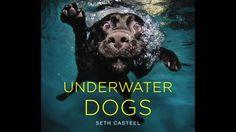 10 cute/ferocious shots of dogs underwater