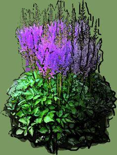Astilbe chinensis Purpurlanze Puzzle, Astilbe, Photoshop, Plants, Puzzles, Riddles, Planters, Jigsaw Puzzles, Plant