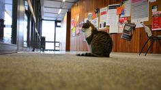 """Campus Cat: """"Fräulein Sinner"""" in der Hildesheimer Universität"""