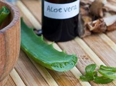 Heal with Aloe Vera Plants @ http://pinterest.com/lindakrueger/health-products/