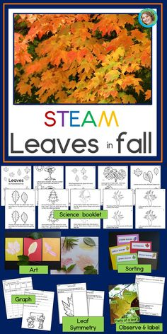 Add hands on science, art, reading, writing and math activities to your fall learning with Leaves in Symmetry Activities, Kindergarten Science Activities, Steam Activities, Teaching Kindergarten, Hands On Activities, Science Lessons, Science Art, Teaching Ideas, Teaching Tools