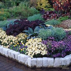 Plan a Fall Finale Here, viola, chrysanthemum, aster, dusty miller, and two varieties of kale fill a bed with color and texture.